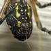 Argiope  Spider Making Silk by Sea Moon