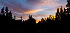 Sunset at Calaveras Big Trees 2