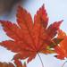 Leave a Leaf on