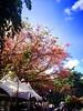 My Sunday sunny flowered sky