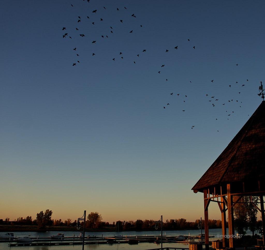 anteketborka.blogspot.com,  birds