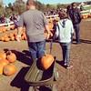Taylor always has to help dad pull the pumpkin wagon. #autumn #pumpkins #gullmeadowfarms #lovethesetwo