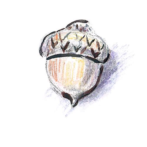 20141023_acorn2