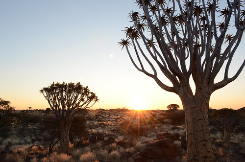#tbt: Quiver trees, Namibia