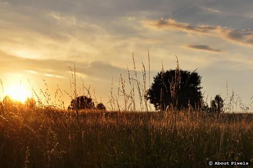 2013-08 Het goud van de zomer bij zonsondergang  (Aquitaine/FR)