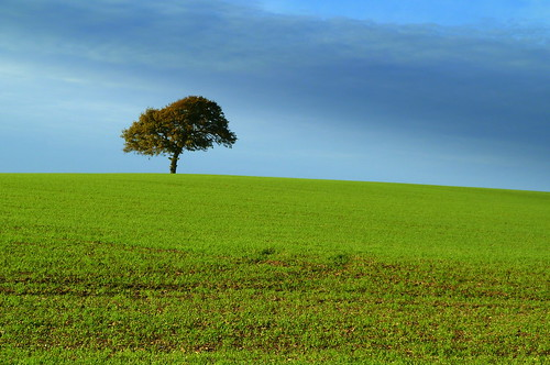 england tree field landscape hertfordshire lonelytree herts solitarytree stagenhoe wandongreen