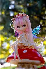 Believe in Fairies~*