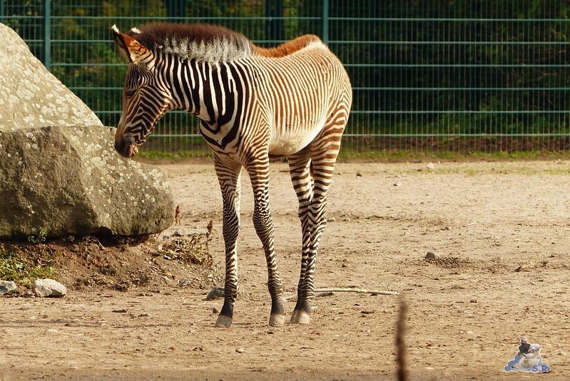 Tierpark Berlin 168