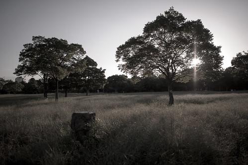park sunset shadow bw sun black tree green grass japan ed nikon f14 osaka while 24 24mm af gradation nikkor afs tsurumi ryokuchi f14g d3s