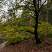 Small photo of Autumn at Abbey Craig