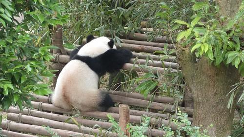 Chengdu-Teil-2-053
