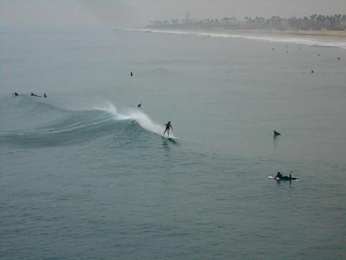surfing (7)