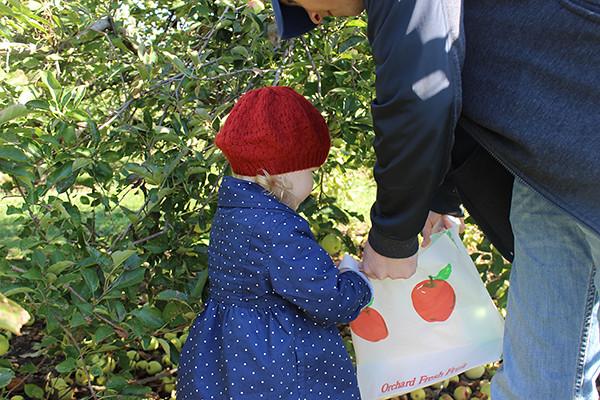 apple-picking 011