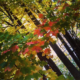 Happy Fall! #fallcolors #fall #foliage #newengland #newhampshire #trees #leaves #leafpeeping
