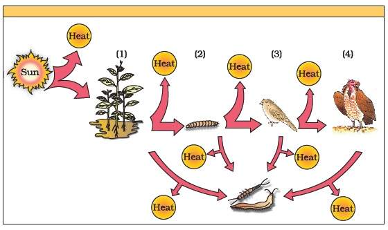 Class 12 Important Questions For Biology Ecosystem