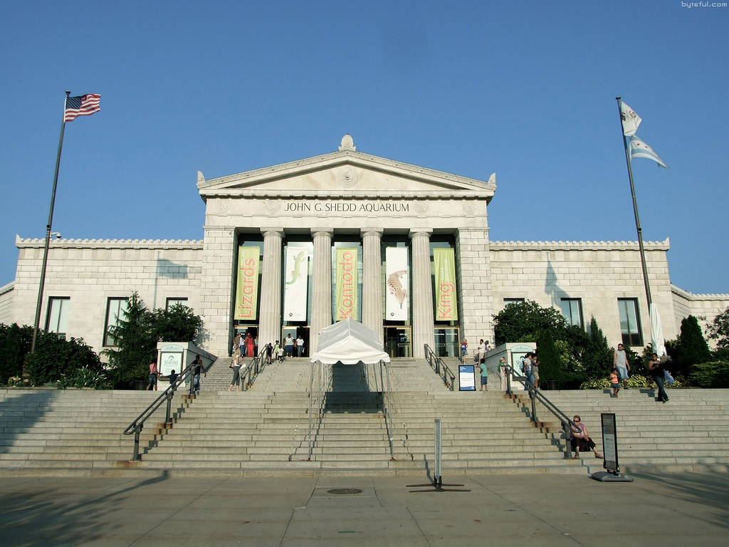 Public transportation is the best way to get to Shedd. Whether you start on Metra or take CTA all the way, you'll arrive within steps of our door!