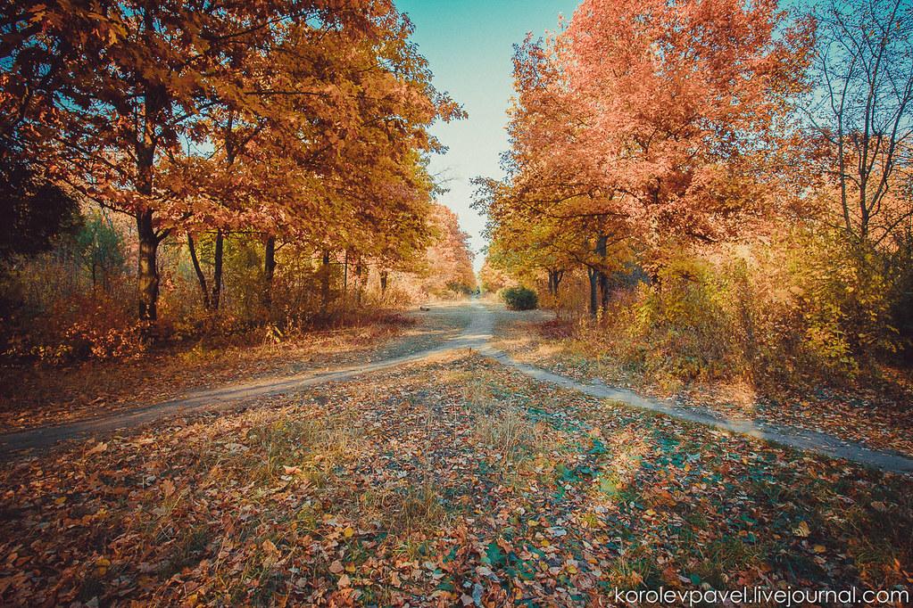 Autumn-132