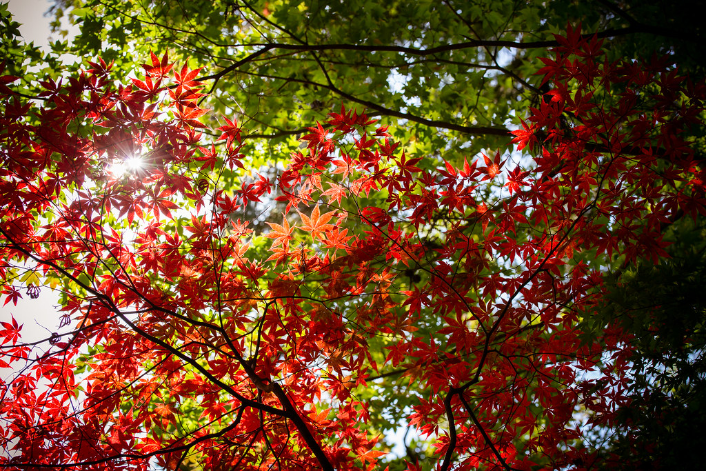 sunshine filtering through the leaves