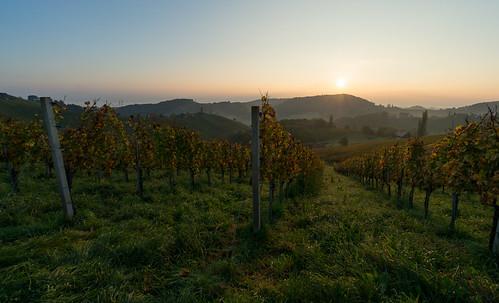autumn sunrise österreich sony herbst vineyards 1018 sonnenaufgang f4 steiermark oss 2014 weinberge südsteiermark ratsch southstyria ratschanderweinstrase sonynex nex6 stermetzberg
