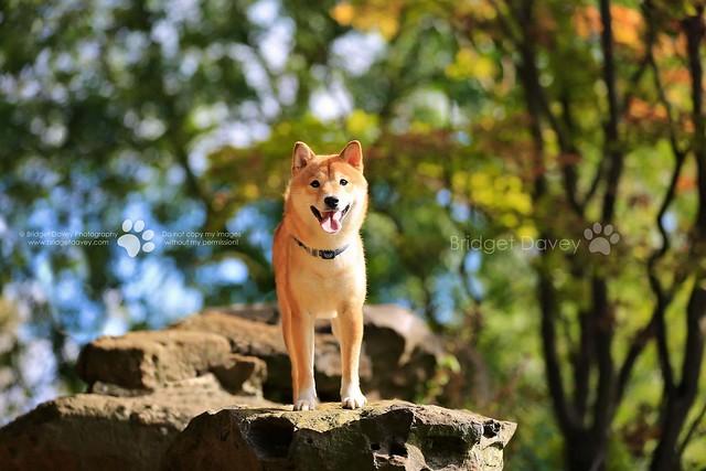 Maera | Pet Portrait Photography Wrest Park | Bedfordshire