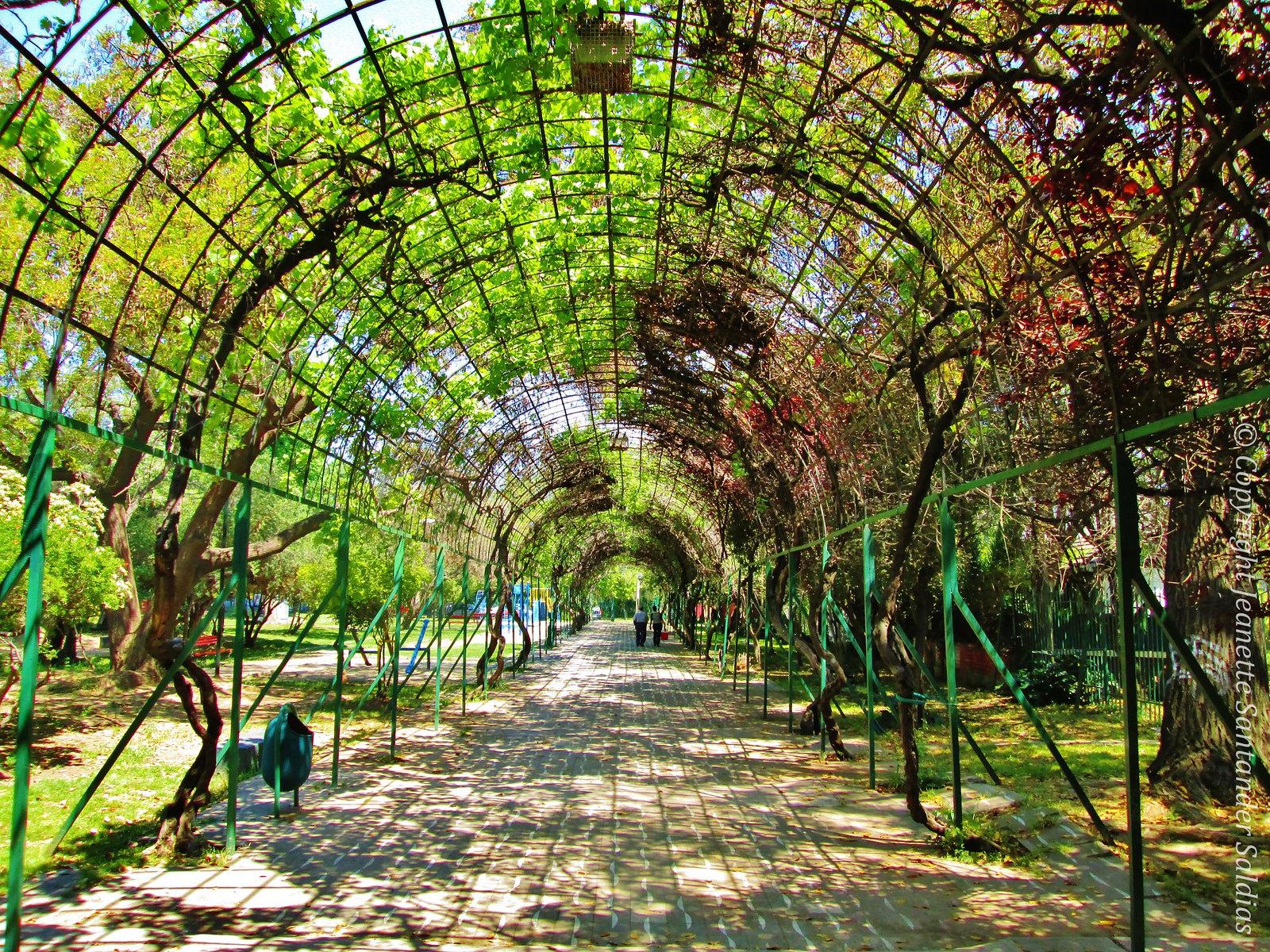 Plant Tunel, Park Juan XXIII, Santiago Chile (Parque Juan XXIII, Túnel Vegetal)