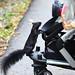 Demanding Squirrel