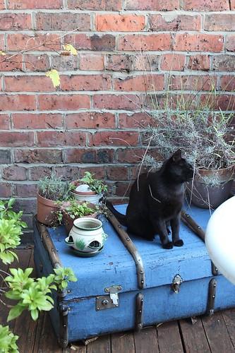 Kenzo in his garden