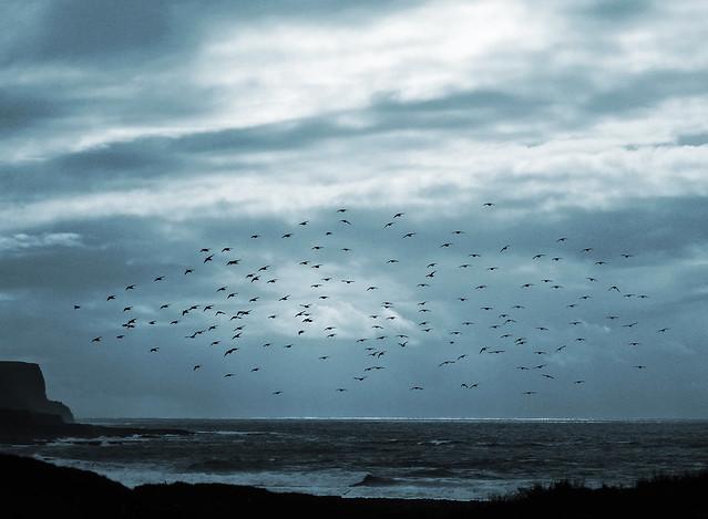 Starlings of Moher, Sony DSC-P120