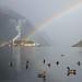 Ducks & rainbow by -Kj.