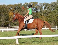 animal sports, equestrianism, english riding, eventing, dressage, mare, stallion, hunt seat, equestrian sport, rein, sports, equitation, horse, horse harness, jockey,