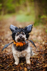 10/12 - Teddy - Bat Dog.