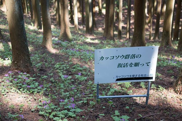 20160430-鳴神山-0260.jpg