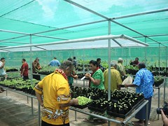 Enhance Climate Change Resilience of Food Production Systems in the Pacific Communities, Sapapalii, 16 October, 2014