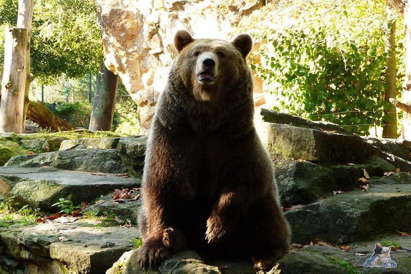 Berliner Zoo 126