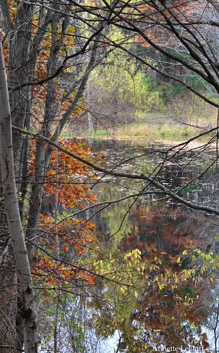 nature clarkstonmi photoannetteleduff annetteleduff october192014 10192014