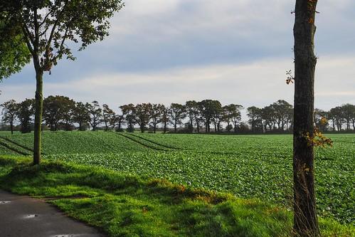 Landschaft Schleswig-Holstein (2)