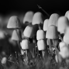 Flore - Champignons - tombera tombera pas...