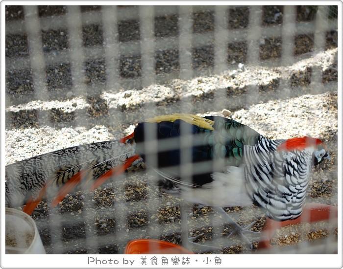 【苗栗卓蘭】自然風情‧青青草原‧景觀民宿餐廳 @魚樂分享誌