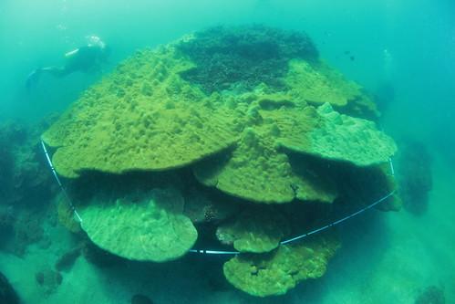 三仙台海域擁有台東海岸難得一見的微孔珊瑚礁墩。(鄭明修/攝影)