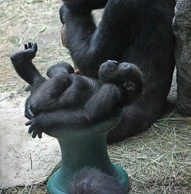 Buffalo Zoo: Nyah