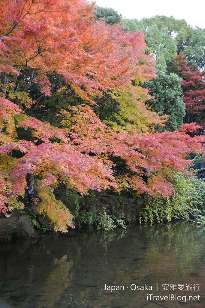 大阪赏枫 万博纪念公园 红叶庭园 14