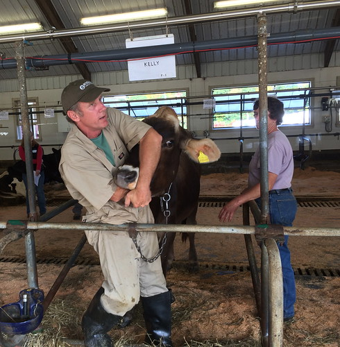 Dr. Hue Karreman demonstrates how to put your arm inside a cow's mouth. Photo by Lisa McCrory