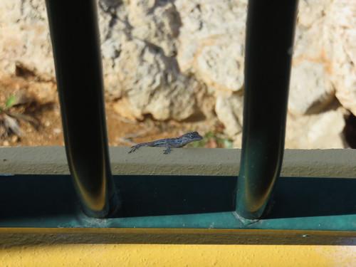 Frühstücksgast auf dem Balkon
