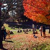 The hill, Rhinebeck, Sunday afternoon. It was perfect today! #rhinebeck #fall
