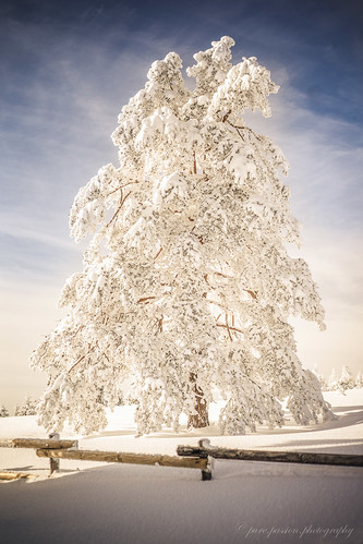 magic winter time