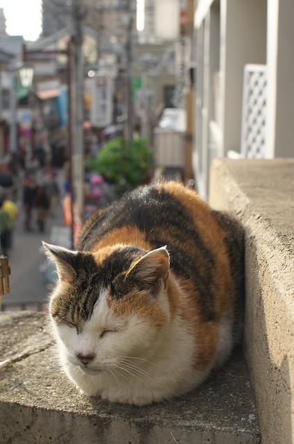 東京路地裏散歩 夕やけだんだんのネコ 2014年11月3日