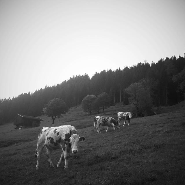 Alm, Tyrol