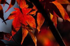 Herbst_2014_0018_bearbeitet-2