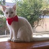 #pisiyimaypisiyim  #şirin #pişik #balası #lovely #sweety #kitty #sweetyhome #Ganja #Azerbaijan