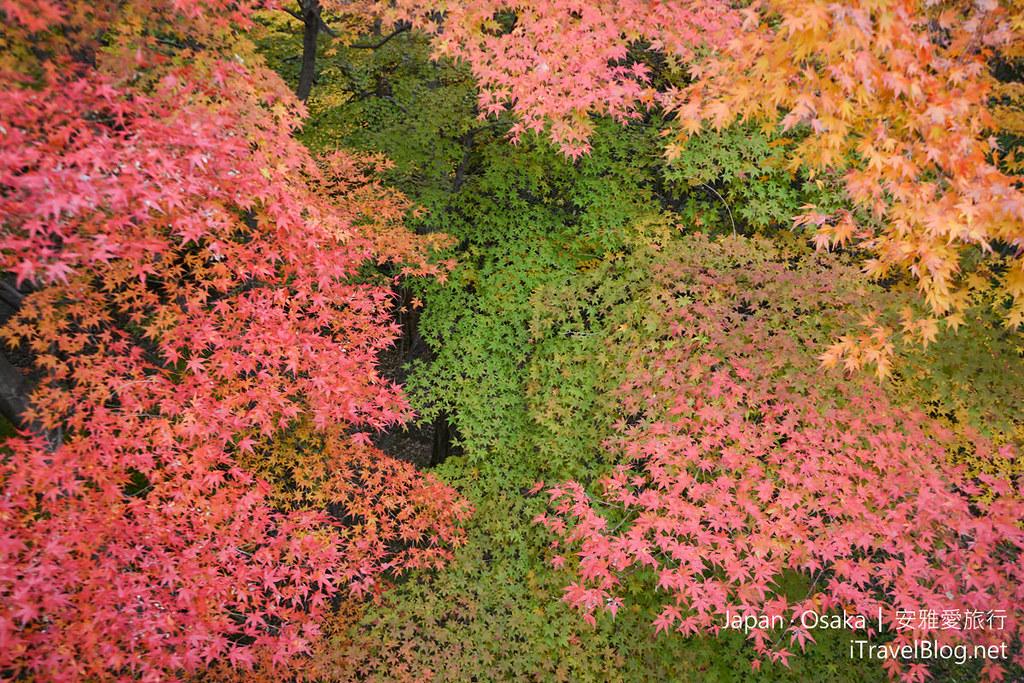 大阪赏枫 万博纪念公园 红叶庭园 22